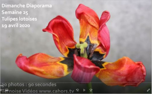 diaporama tulipes